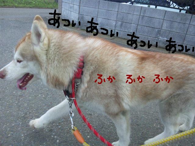 ★UKC JAPAN★ボランティア便りwithチャイマルさん_d0187891_1242770.jpg