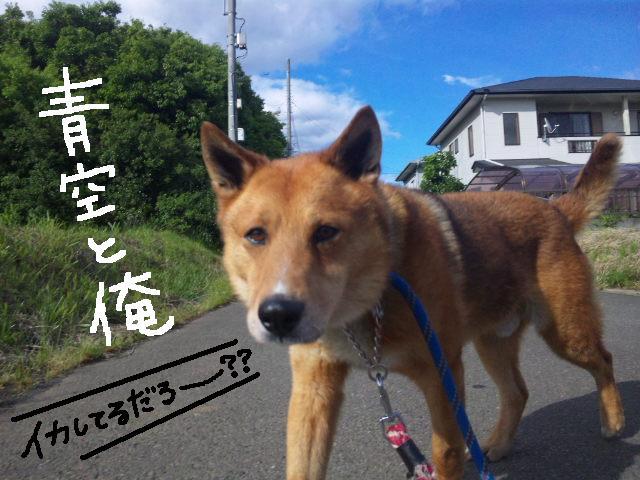 ★UKC JAPAN★ボランティア便りwithチャイマルさん_d0187891_1243953.jpg