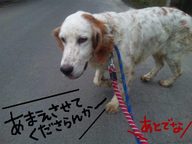 ★UKC JAPAN★ボランティア便りwithチャイマルさん_d0187891_1244547.jpg