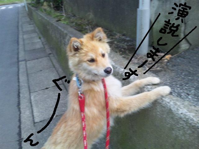 ★UKC JAPAN★ボランティア便りwithチャイマルさん_d0187891_1245339.jpg
