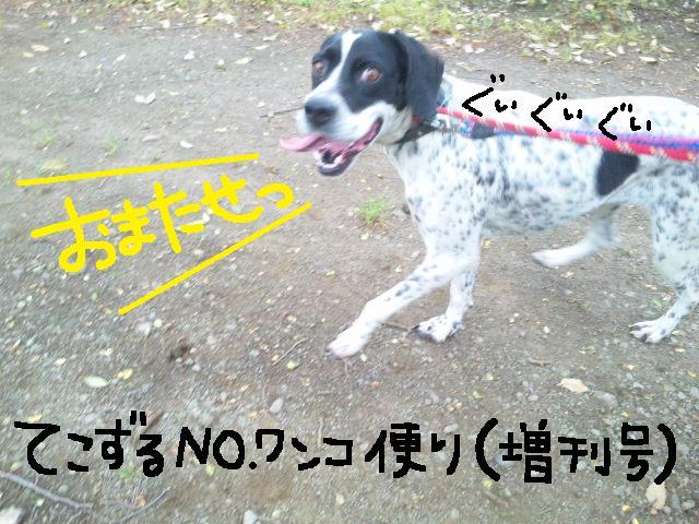 ★UKC JAPAN★ボランティア便りwithチャイマルさん_d0187891_1251873.jpg