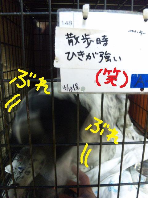 ★UKC JAPAN★ボランティア便りwithチャイマルさん_d0187891_1253216.jpg