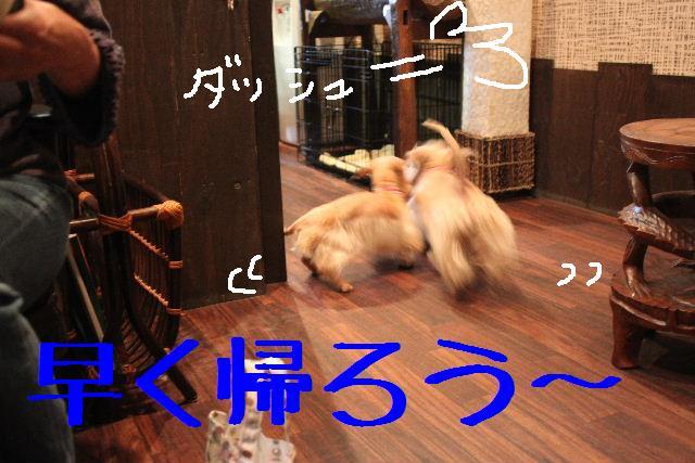 b0130018_9325059.jpg