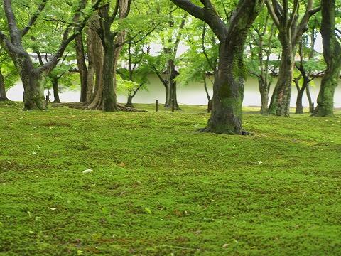 東福寺_c0077531_2335960.jpg