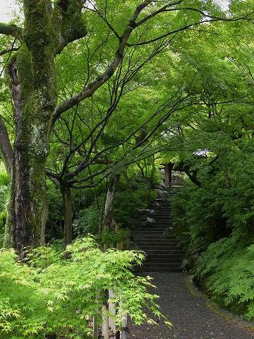 東福寺_c0077531_2337537.jpg