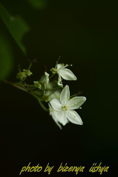 『海蔵寺の花たち』_d0086248_751946.jpg