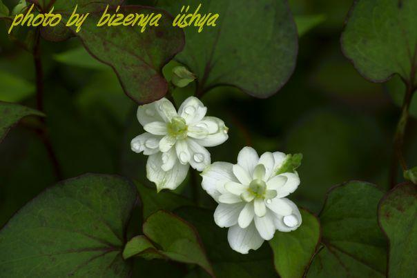 『海蔵寺の花たち』_d0086248_753444.jpg