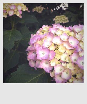 f0121751_20124939.jpg