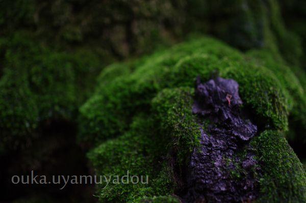靖国神社_a0157263_2241245.jpg