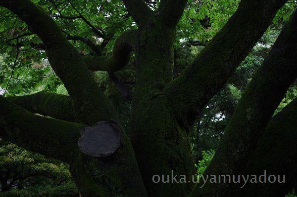 靖国神社_a0157263_22412839.jpg