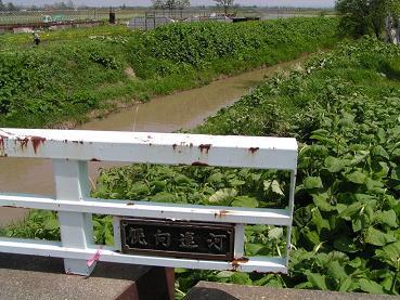幌向運河_f0078286_105150.jpg