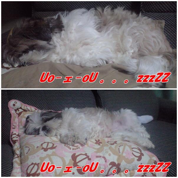 b0124693_20122689.jpg