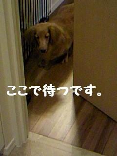 b0210702_23295583.jpg