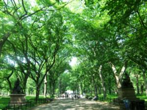 セントラルパーク最大の並木道、モールの新緑風景_b0007805_3352955.jpg