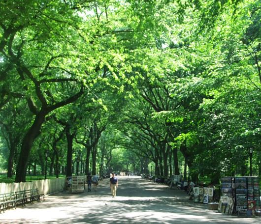 セントラルパーク最大の並木道、モールの新緑風景_b0007805_3355127.jpg