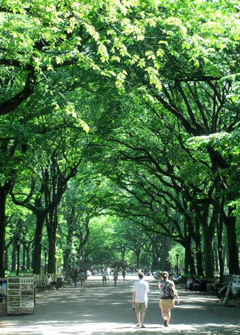 セントラルパーク最大の並木道、モールの新緑風景_b0007805_335684.jpg