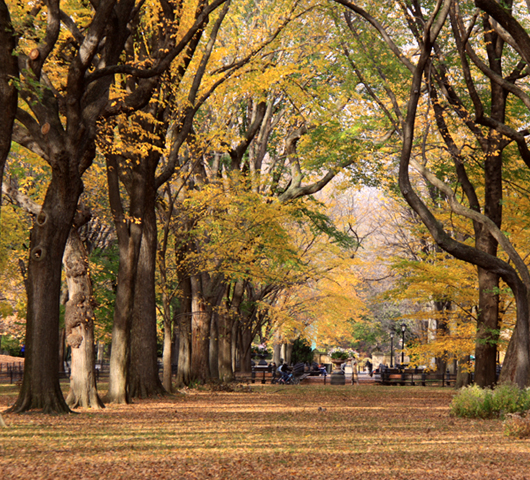 セントラルパーク最大の並木道、モールの新緑風景_b0007805_3372514.jpg