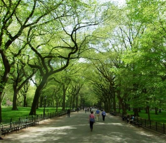 セントラルパーク最大の並木道、モールの新緑風景_b0007805_337476.jpg