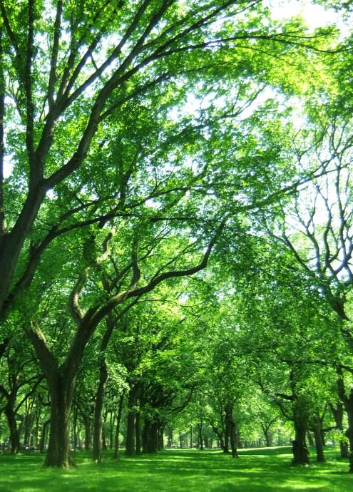 セントラルパーク最大の並木道、モールの新緑風景_b0007805_3393282.jpg