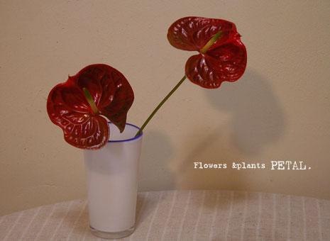 トロピカルなお花で暑さも少しゆるむ(気がする)_d0157716_22164746.jpg