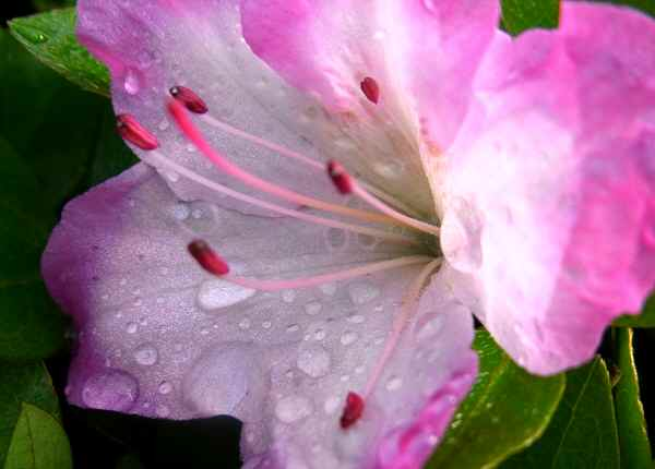 雨上がりの朝       _f0214527_12205845.jpg
