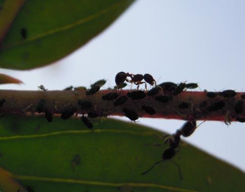 蟻のお仕事_e0097534_15445048.jpg