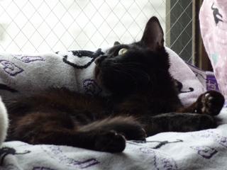 猫のお友だち 撫子ちゃん編。_a0143140_23212585.jpg