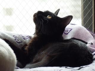 猫のお友だち 撫子ちゃん編。_a0143140_23224179.jpg