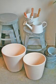今週の鉢物さん_b0209477_18363651.jpg