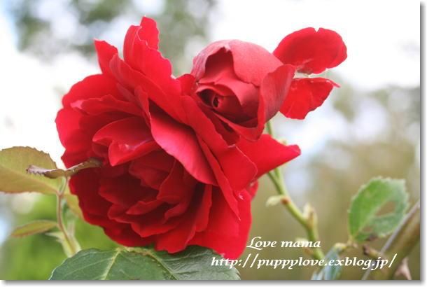 b0136683_1533325.jpg
