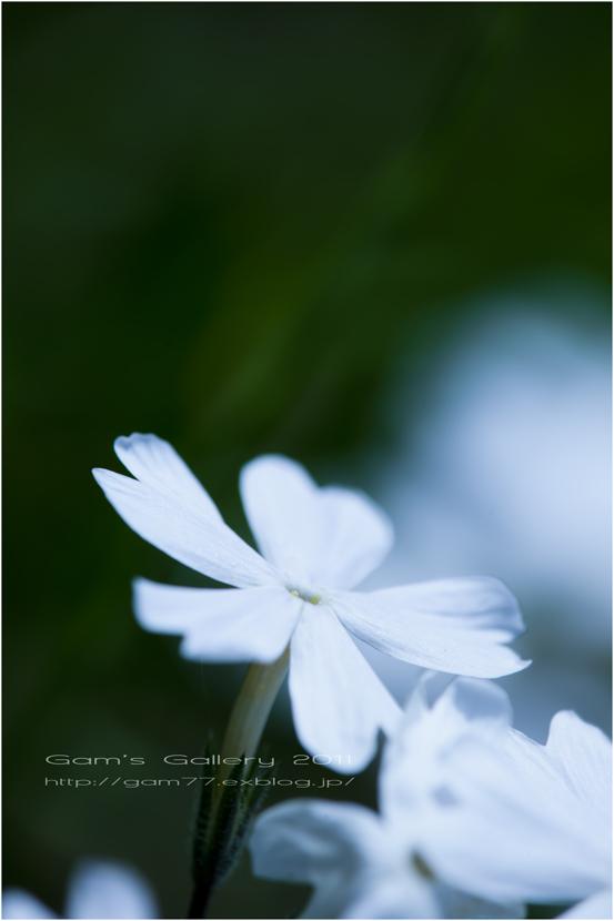 White_f0195893_555150.jpg