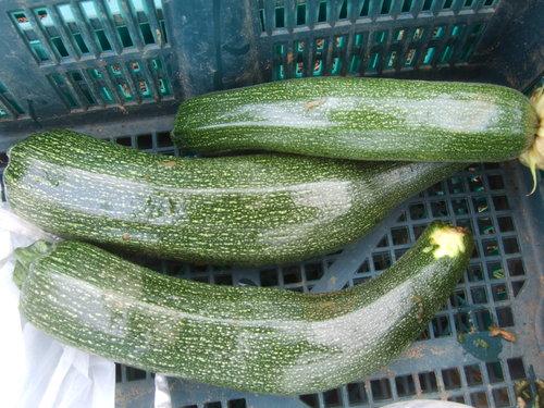 久し振りに野菜畑....野菜も草も成長しています。_b0137932_7274543.jpg