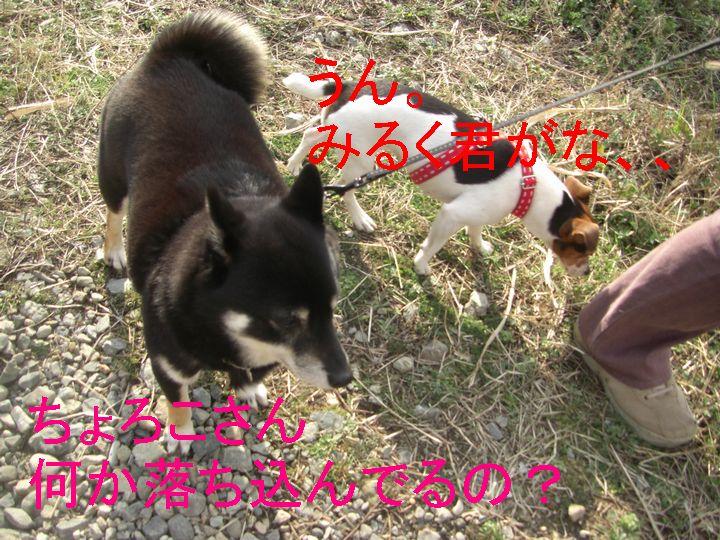 f0053952_1335101.jpg