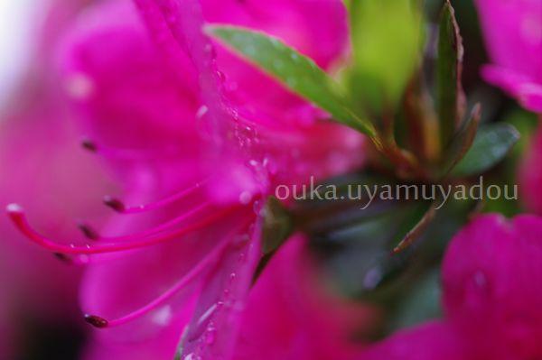 靖国神社_a0157263_1444087.jpg