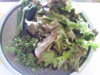 畑の野菜サラダ_e0159969_16592124.jpg