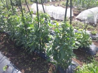 畑の野菜サラダ_e0159969_1705683.jpg