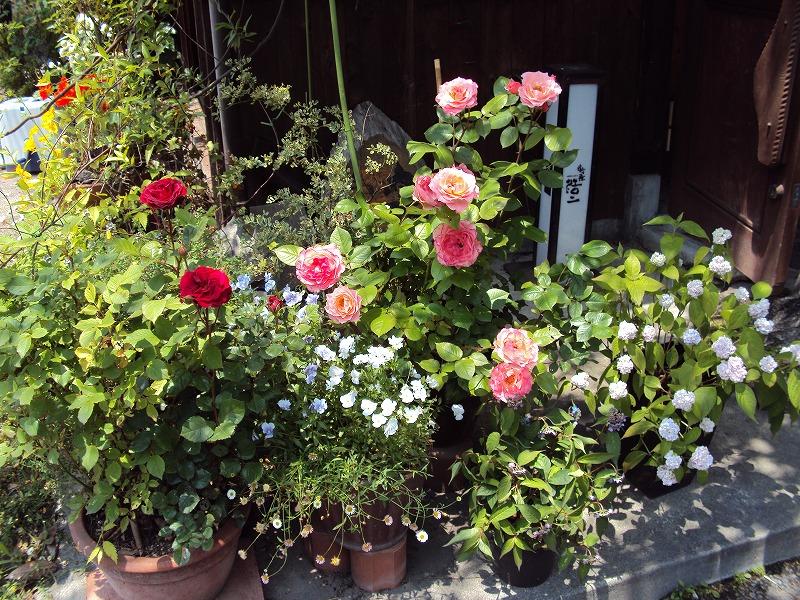 花、満開_c0140982_129258.jpg