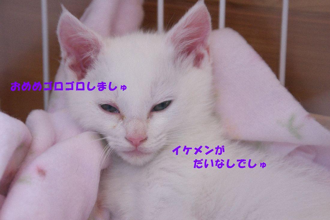f0197682_23271298.jpg