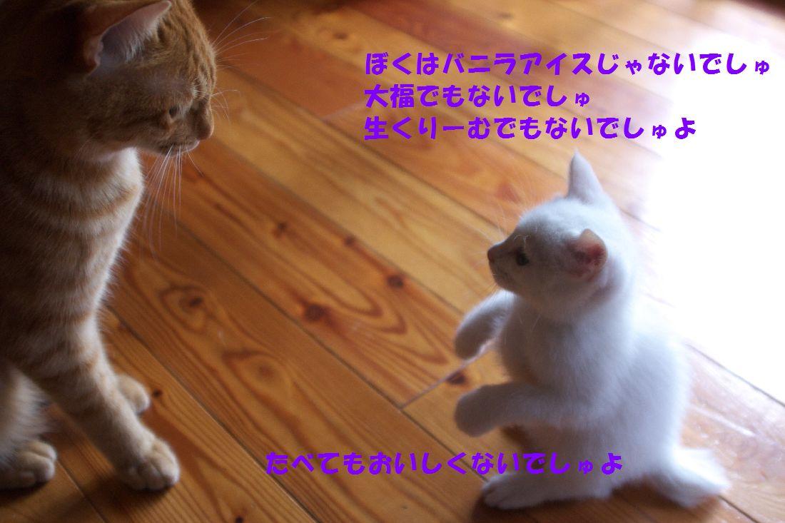 f0197682_2327245.jpg