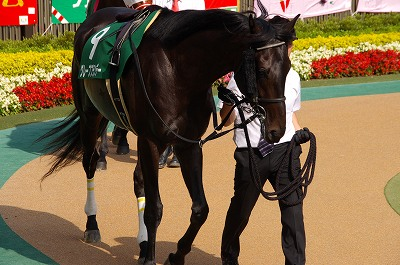 ユニコーンS(GIII)はアイアムアクトレスが、12年振り牝馬史上2頭目のV _b0015386_21123731.jpg