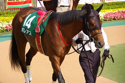 ユニコーンS(GIII)はアイアムアクトレスが、12年振り牝馬史上2頭目のV _b0015386_21131825.jpg
