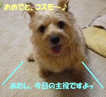 a0154801_1921751.jpg