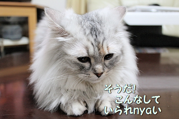 c0211109_3243627.jpg