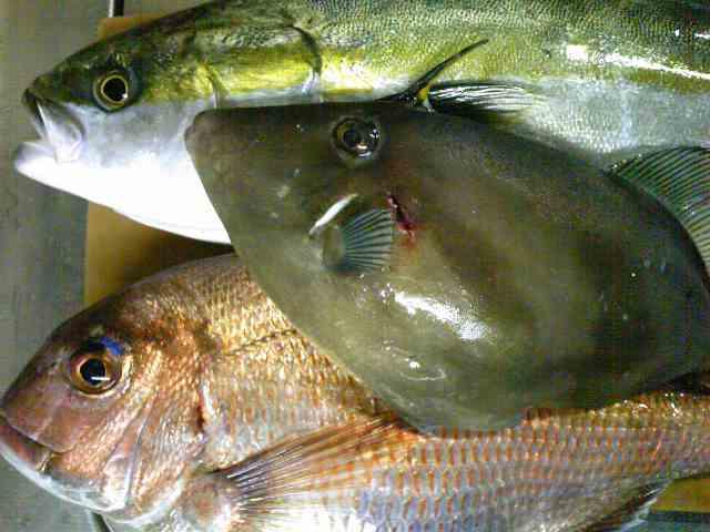 魚魚魚_e0202518_14402522.jpg
