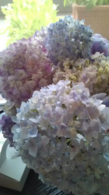 紫陽花と村上開新堂_a0042928_19332894.jpg