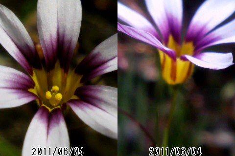 ケータイマクロ撮影した花_e0089232_10591917.jpg