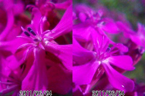 ケータイマクロ撮影した花_e0089232_10593648.jpg