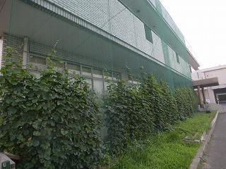 緑のカーテン 半田市環境センター_f0059988_9433462.jpg