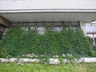 緑のカーテン 半田市環境センター_f0059988_94412100.jpg