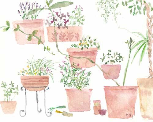 6月の庭 _d0115092_75235100.jpg